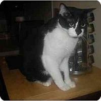 Adopt A Pet :: Samantha - Summerville, SC