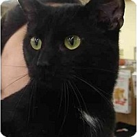 Adopt A Pet :: Monkey - Chesapeake, VA