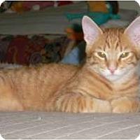 Adopt A Pet :: Bravo - lake elsinore, CA