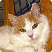 Adopt A Pet :: Spencer - Davis, CA