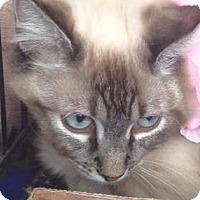 Adopt A Pet :: Miss Donnie - Irvine, CA