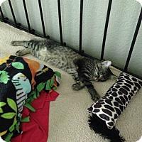 Adopt A Pet :: Micca - Loveland, CO