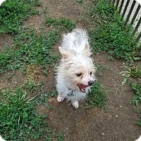 Adopt A Pet :: WYATT - New Windsor, NY