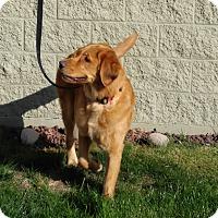Adopt A Pet :: WINSTON **adoption pending!** - Nampa, ID