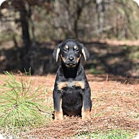 Adopt A Pet :: Bonnie - Groton, MA