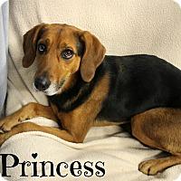 Adopt A Pet :: Princess - Melbourne, KY