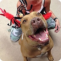 Adopt A Pet :: CHOPPERS - Valley Village, CA