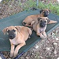 Adopt A Pet :: Kitty, Kane, and Kilo - Spring Branch, TX
