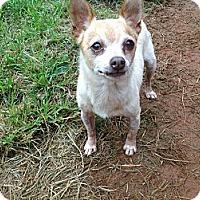 Adopt A Pet :: Apple - hartford, CT