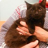 Adopt A Pet :: Groban - Reston, VA