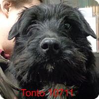Adopt A Pet :: Tonto - baltimore, MD