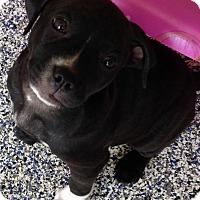 Adopt A Pet :: Harper - Washington, PA