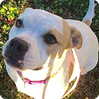 Adopt A Pet :: NO FEE - Sheera - Corning, CA