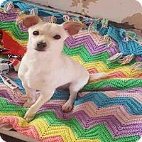 Chihuahua Dog for adoption in Hanford, California - MILO