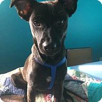Adopt A Pet :: Matthew (reduced fee) - Windham, NH