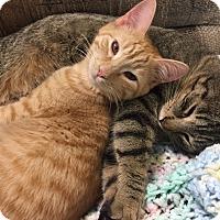 Adopt A Pet :: Morris - Tioga, PA