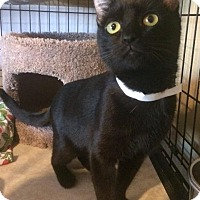 Adopt A Pet :: Pebbles - Freeport, NY