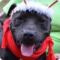 Adopt A Pet :: Cranberry - Ridgeland, SC