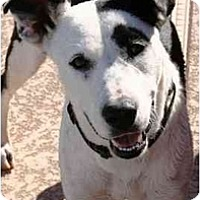 Adopt A Pet :: Sedona - Gilbert, AZ