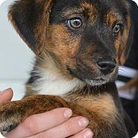 Adopt A Pet :: Blackie 2 - Danbury, CT