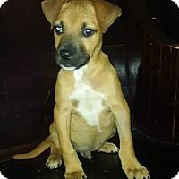Adopt A Pet :: Ezekiel - Harrisonburg, VA