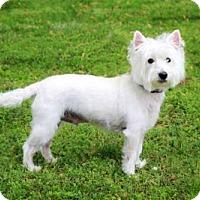 Adopt A Pet :: GUS - Sussex, NJ