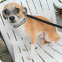 Adopt A Pet :: Duncan - Umatilla, FL