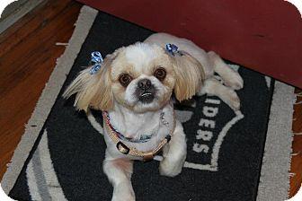 Pekingese Mix Dog for adoption in Richmond, Virginia - Asia