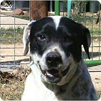 Pointer Mix Dog for adoption in Tyler, Texas - TG-Lex