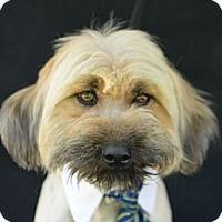Adopt A Pet :: Owen - Plano, TX