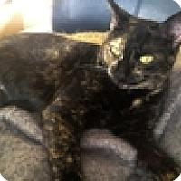Adopt A Pet :: Kisses - Vancouver, BC