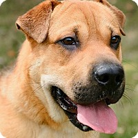 Adopt A Pet :: Baby Boy - ADOPTED! - Zanesville, OH