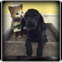 Adopt A Pet :: Boomer - Indian Trail, NC