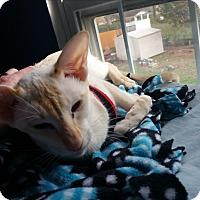 Adopt A Pet :: Miri - Fairborn, OH
