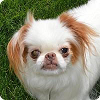 Adopt A Pet :: Sallie - Aurora, CO