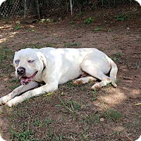 Adopt A Pet :: Blue Boy - Dawson, GA