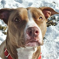 Adopt A Pet :: Sunny - Lakeville, MN