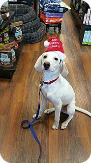 Hound (Unknown Type) Mix Puppy for adoption in Richmond, Virginia - Jack