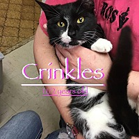 Adopt A Pet :: Crinkles - Hearne, TX