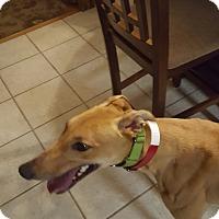 Adopt A Pet :: BooHoo - Knoxville, TN