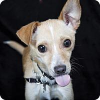 Adopt A Pet :: RUBY - Nashville, TN