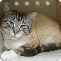 Adopt A Pet :: REDFORD - Tulsa, OK