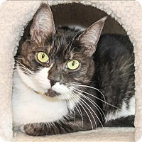 Adopt A Pet :: Domi - San Luis Obispo, CA