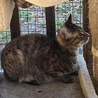 Adopt A Pet :: Snickerdoodle - Crestview, FL