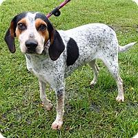 Adopt A Pet :: LuAnne - Newport, NC