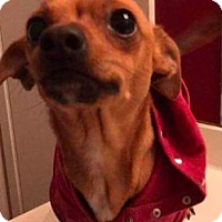 Adopt A Pet :: Felicity - Media, PA