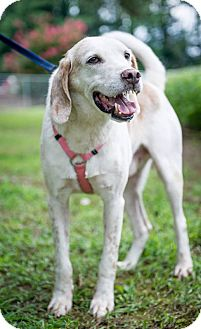 Hound (Unknown Type) Dog for adoption in Providence Forge, Virginia - Willie