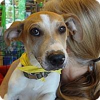 Adopt A Pet :: Baxter - Nuevo, CA