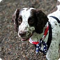 Adopt A Pet :: Rango - Douglas, MA