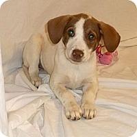 Adopt A Pet :: River - South Jersey, NJ